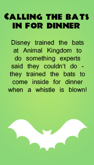Disney trivia lunchbox notes (batch #1) from @WDWPrepSchool