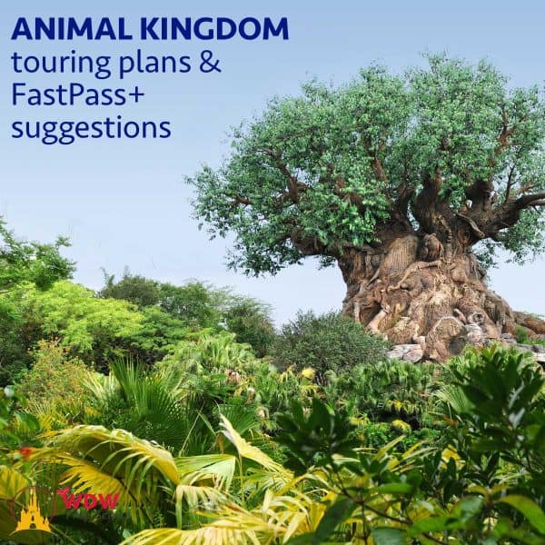 Animal Kingdom touring plans