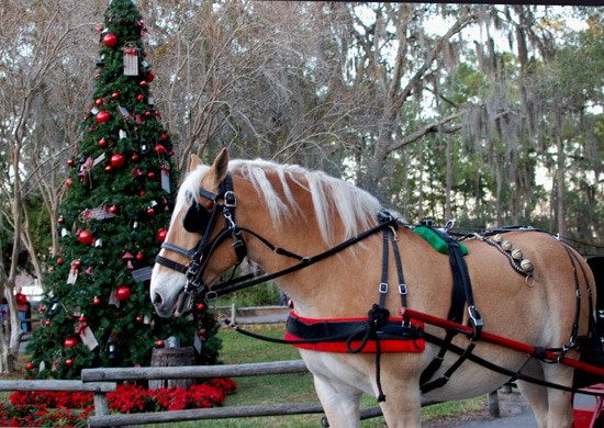 horses - 15 unique things to do at Disney World (and some are even free)