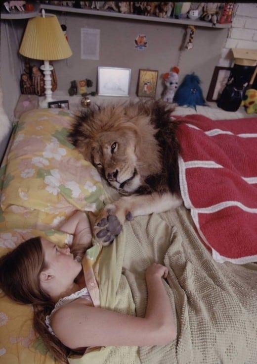 lion in bed - 11 Secrets of Animal Kingdom