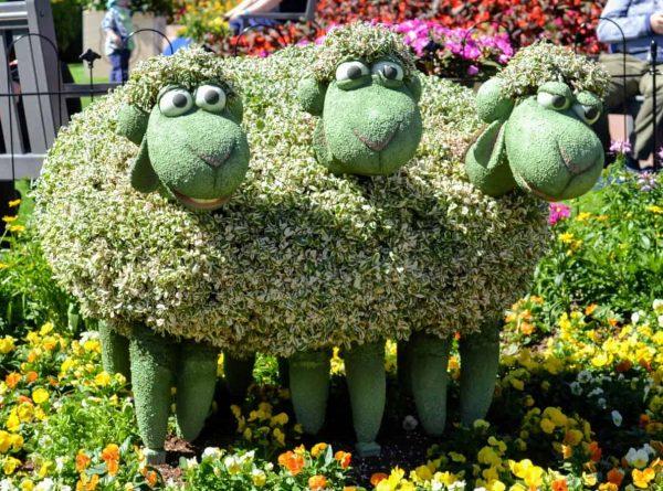 Sheep Flower and Garden Festival