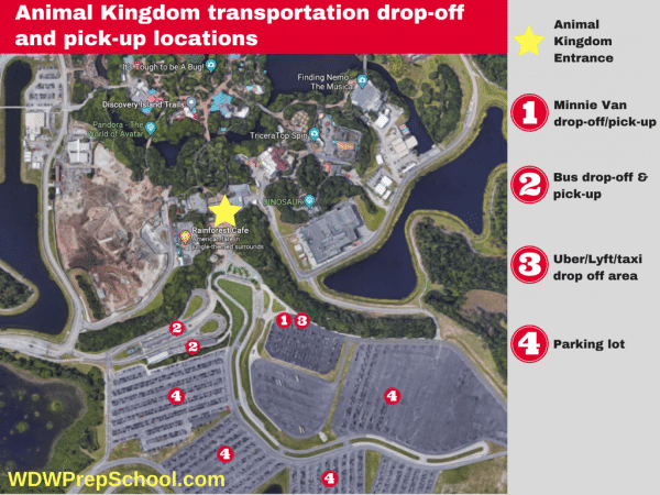 Animal Kingdom transportation location 600x450 - Minnie Vans now available at all resorts! Here's how they work.