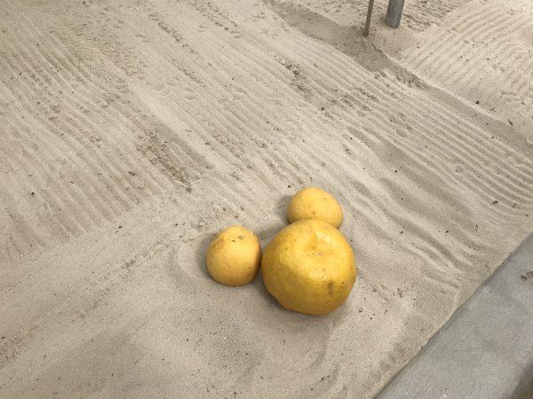 Behind the Seeds tour lemon