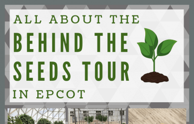 Behind the Seeds tour