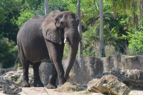Elephant on the Caring for Giants tour