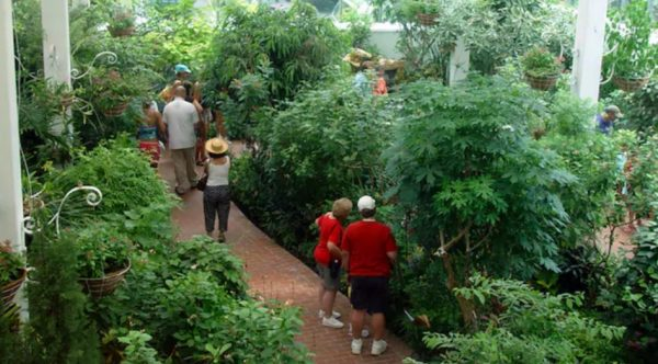 Key West Butterfly and Nature Conservatory with Aquarium
