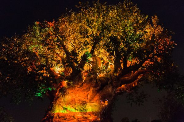 Tree of Life Disney After Hours at Animal Kingdom