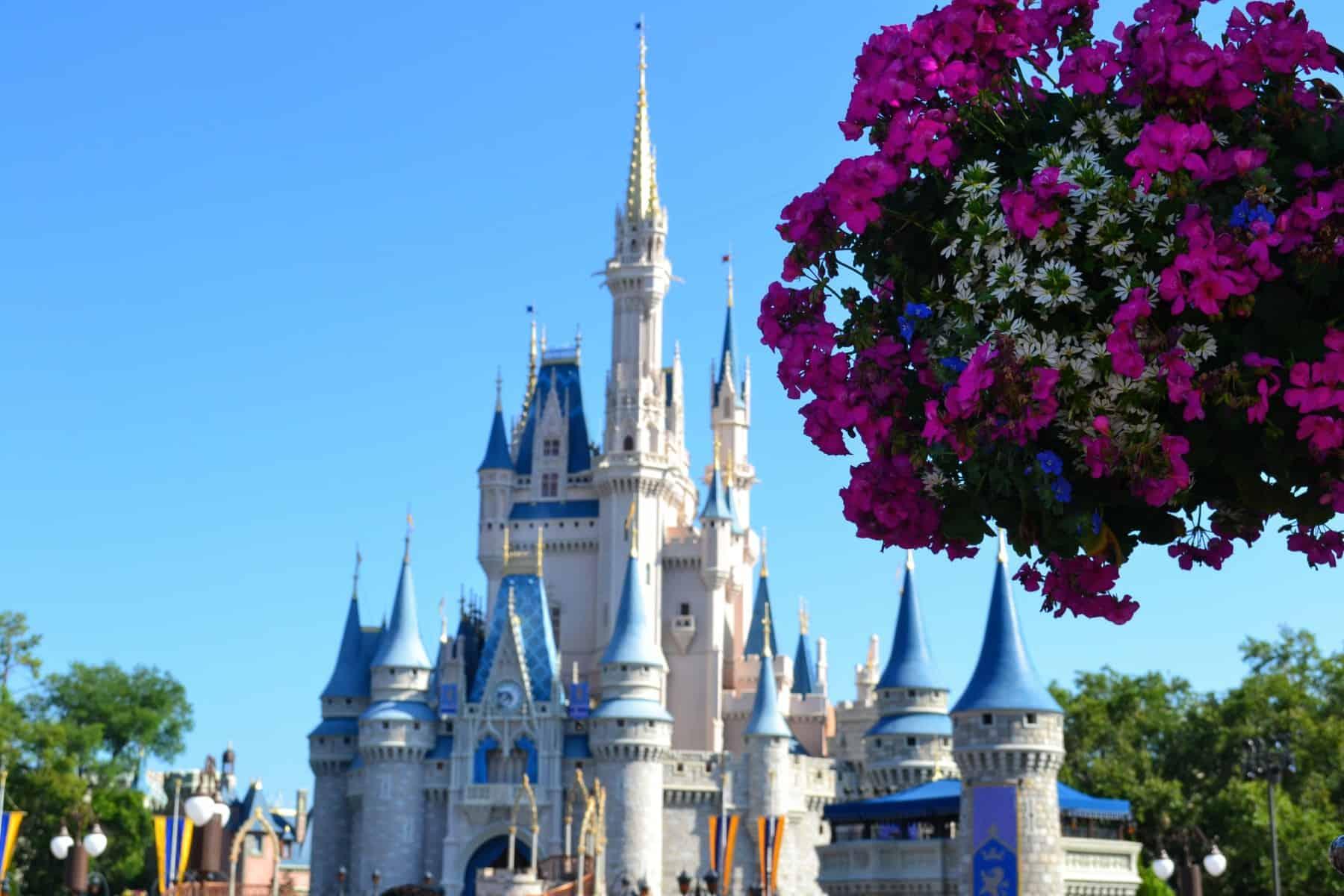 Cinderella Castle flowers