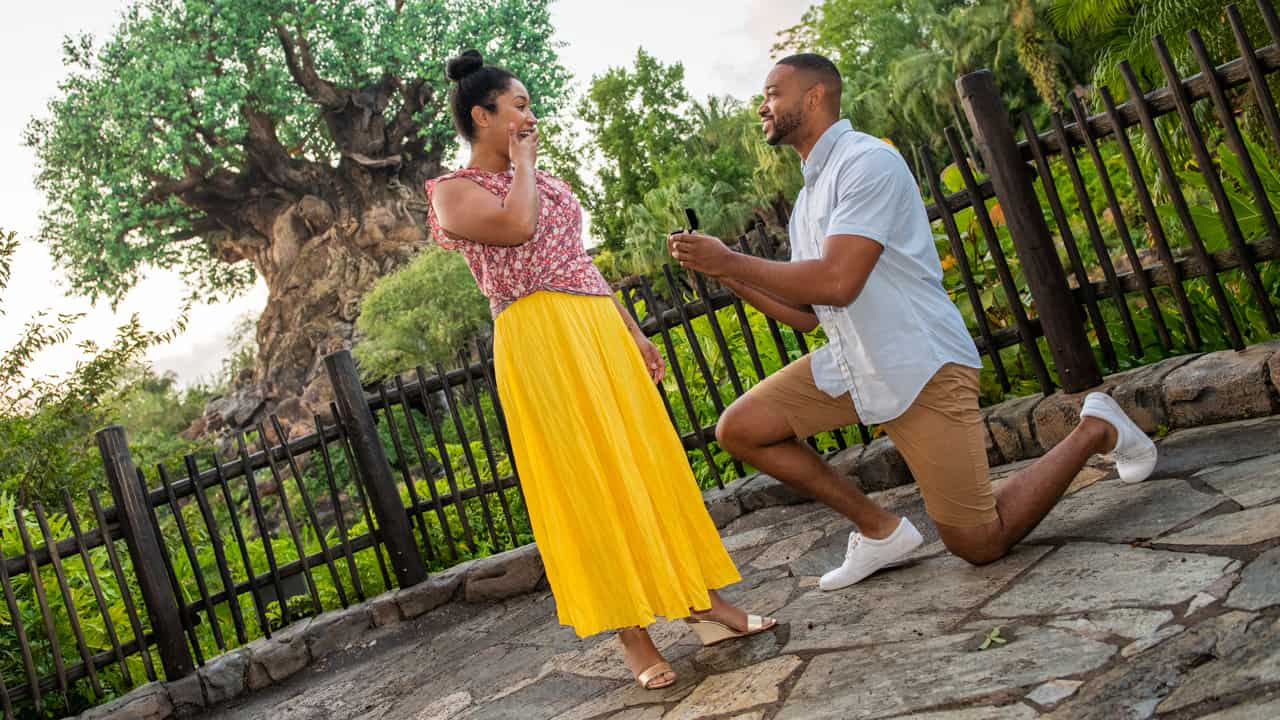 capture your moment at animal kingdom