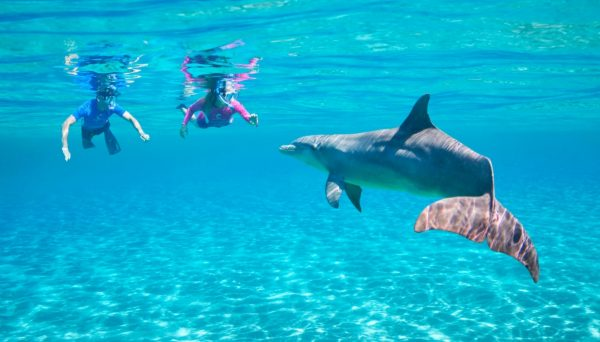 Atlantis Aquaventure with Snorkel and Dolphins in Nassau