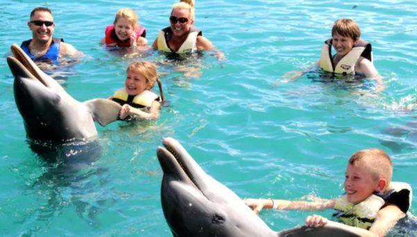 Blue Lagoon Island Dolphin Swim in Nassau
