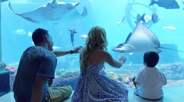 Discover Atlantis Tour in Bahamas