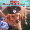 Dogs at Disney World resorts