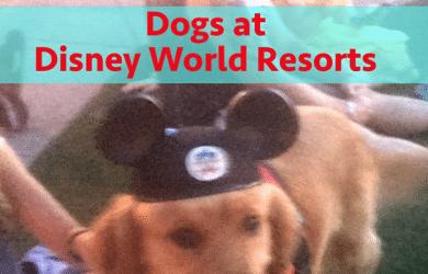 Dogs at Disney World resorts