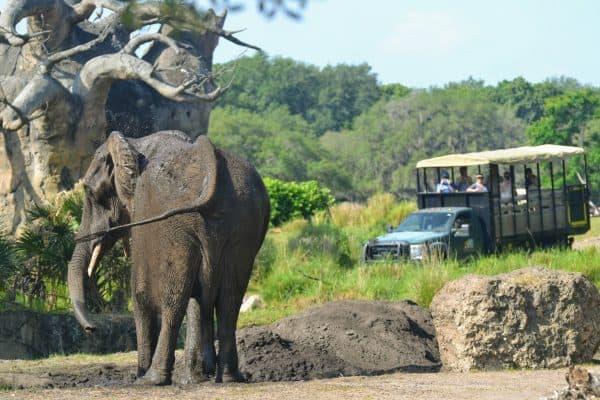 elephant on kilimanjaro safaris at animal kingdom