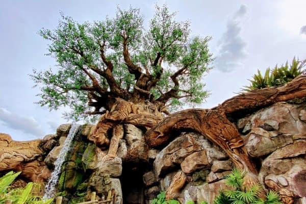 Tree of Life Animal Kingdom February at Disney World