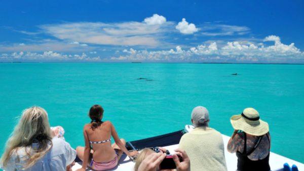 Key West Dolphin Watch & Snorkel