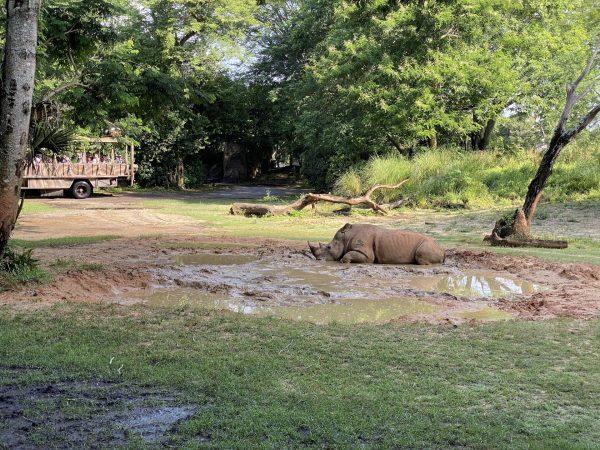 rhino on kilimanjaro safaris
