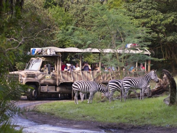 zebras on kilimanjaro safaris