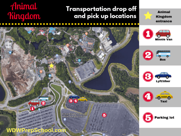 Animal Kingdom Transportation options