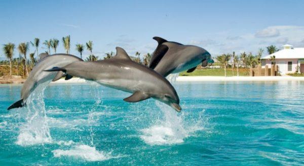 Observer at Atlantis Dolphin Cay & Discover Atlantis
