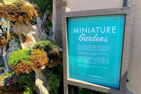 Minature garden Flower and Garden Festival