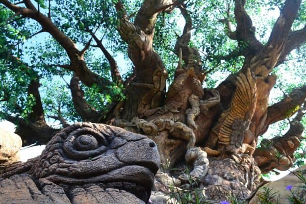 Tree of Life view on Discovery Island Trail