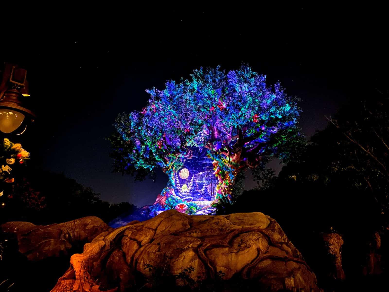 Tree of Life holidays