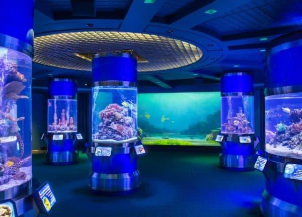 aquarium at the seas pavilion
