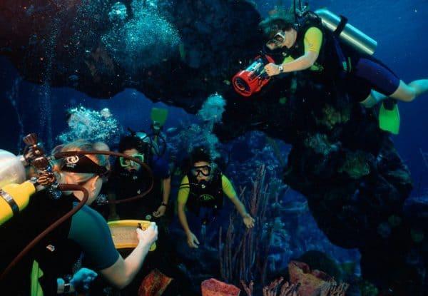 the seas pavilion dive quest paid experience
